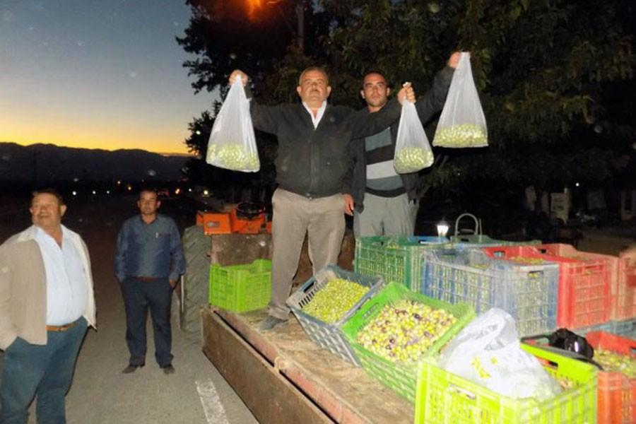 Üreticiler 3 ton zeytini protesto için bedava dağıttı