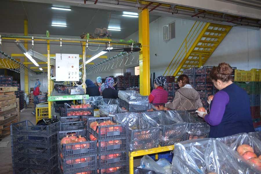Paketleme ve taşıma işçileri: İş 12 saat, ücret 70 TL