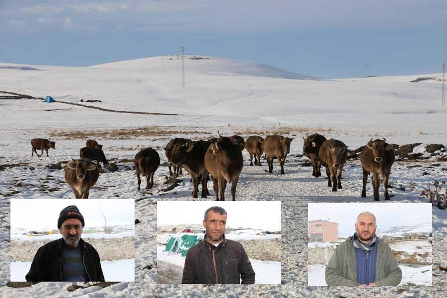 Ardahanlı süt üreticileri yaz kış 30 tüccara çalışıyor