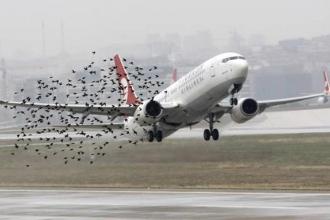 Kuşlar mı çarpar uçaklar mı?