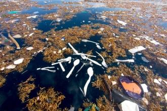 'Bazı balinalar her gün yüzlerce parça plastik sindiriyor'