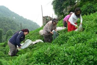 Çay işçisi kadının emeğinin karşılığını vermemek sevap mı?