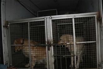 Beslediği 2 köpeği döven adam gözaltına alındı