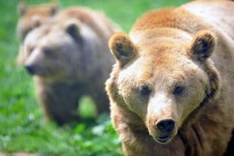 Kış uykusundan uyanan ayıların bahar turu