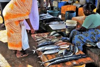 Balık yemek Parkinson hastalığının 'önlenmesinde' yardımcı oluyor
