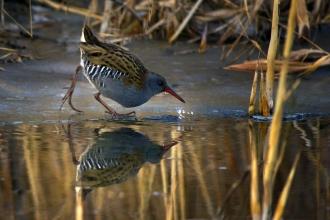 Beyşehir Gölü, 185 kuş türüne ev sahipliği yapıyor