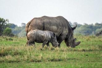 Kenya'da kaçak avcılara idam cezası yasalaşabilir
