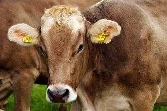TZOB: Bir kilo çiğ süt parasıyla 1.5 kilo yem alınabilmeli