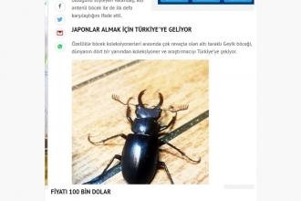 'Bu böceğin kilosu 5000 Euro', 'İlk kez görüldü' haberlerine dikkat!