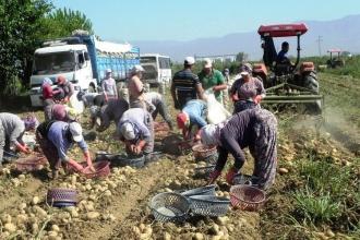 Patates ve soğan uyarısı: Çözüm ithalat olursa üretim azalır