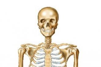 Bir Tıp Öğrencisinin Anatomisi