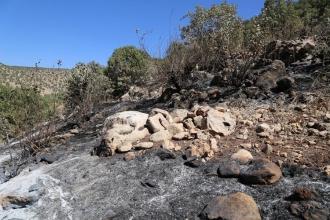 HDP, DBP ve DTK  heyeti Diyarbakır'daki orman yangınlarını inceledi