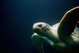 Meksika kıyılarında 113 deniz kaplumbağası kıyıya vurdu