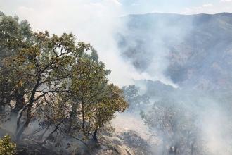 Trabzon'da makilik alanda yangın: 80 dönüm alan zarar gördü