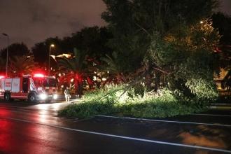 Vatan Caddesi'nde ağaç yola devrildi