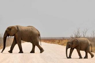 Sri Lanka'da filler, avlanmaya çalışan 19 kişiyi öldürdü