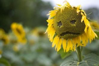 Kişi başına düşen mutluluk oranı