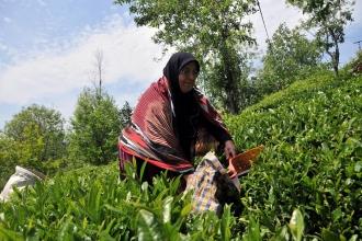 Çayda önlem alınmazsa 1 milyon kişi ekonomik tehlikede