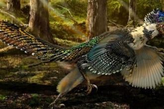 Kuşlar, yok olmaktan nasıl kurtuldu?