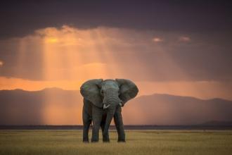 Liderler tepinirken filler eziliyor