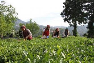 Çay üreticileri: Bu fiyat bizi özel sektöre mecbur eder