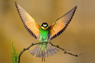 Bırakın yuvayı kuşlar yapsın