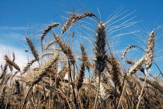 Tarımda enflasyon Aralık'ta arttı