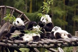 Pandalardan güzel haber