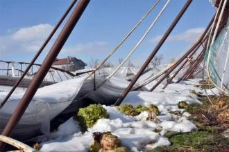 Konya'da serası yıkılan üreticiler destek bekliyor