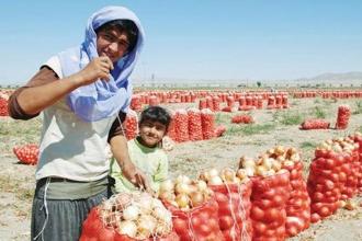 Soğan üreticisi çözüm bekliyor