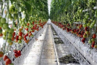 TZOB: Domates üreticileri korunmalı