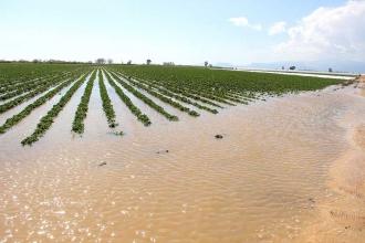 Göksu Irmağı taştı, tarım arazileri su altında kaldı