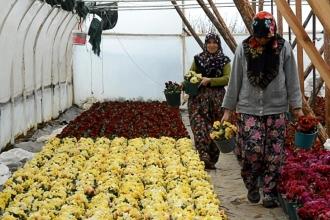 Mermer ocağını kapattıran kadınlar şimdi çiçek yetiştiriyor