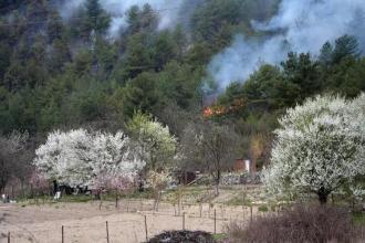 Karabük'te 3 dönümlük kızılçam ormanı yandı
