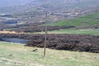 Şırnak'ta 'güvenlik' gerekçesiyle binlerce ağaç kesildi