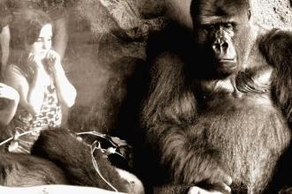 12 Maymun'dan, Maymunlar Gezegeni'ne ve Harlow'un Yalnız Maymunlarına