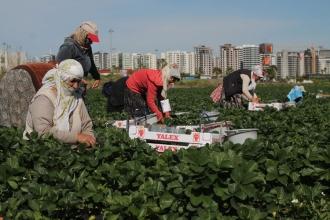 Mevsimlik tarım işçileri gün yüzü görebilecek mi?