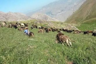 AKP meraları ranta açıyor: Hayvancılığın  ölüm fermanı