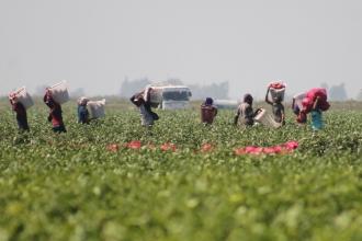 Adana'da yağış mağduru çiftçinin zararı karşılanacak mı?