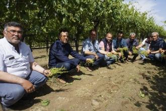Manisa'daki tarım arazilerini dolu vurdu