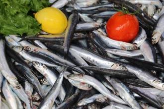 Aşırı avcılık ve küresel ısınma balıkçılığı kötü etkiliyor!