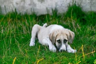 İtalya'da hasta köpeğine bakmak isteyene ücretli izin