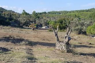 İzmir Büyükşehir Belediyesi'nden zeytinlik alana şantiye