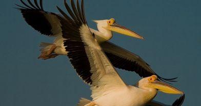Kuşların göç rotaları değiştirilemez