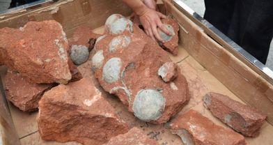 Fosilleşmiş dinozor yumurtası bulundu