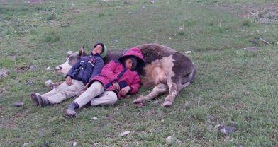 Yastığı öküz olan çocukların şirin uykusu