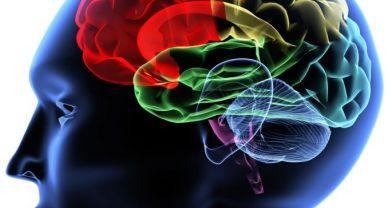 Anılar beynin hangi noktasında?
