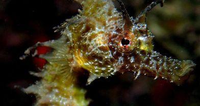 Kuşadası, denizatı görülen kıyılar haritasına girdi