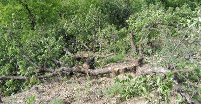 Ormanlar  güvenliğe  kurban ediliyor