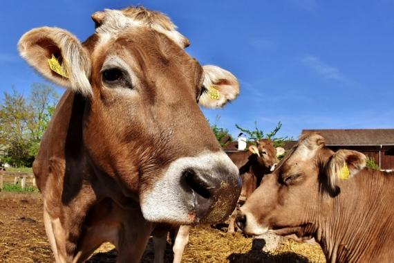 İthal edilen binlerce canlı hayvanın veteriner sağlık sertifikaları sahte çıktı